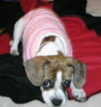 My beloved puppy Bunny, in the first sweater I crocheted for her.